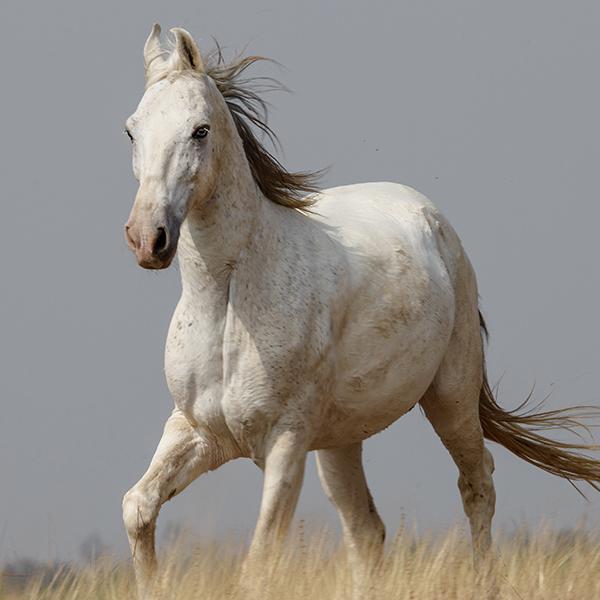 Sponsor a Horse